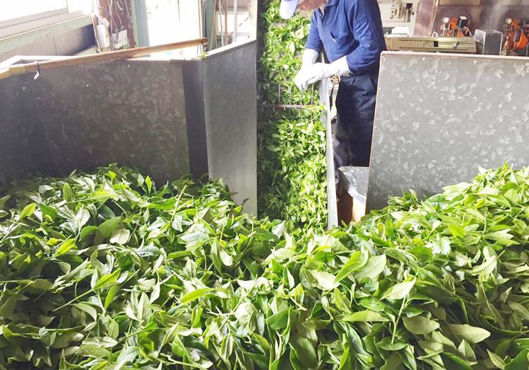 狭山茶の特徴